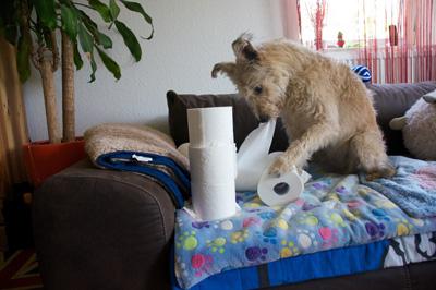 Toilettenpapier Challenge