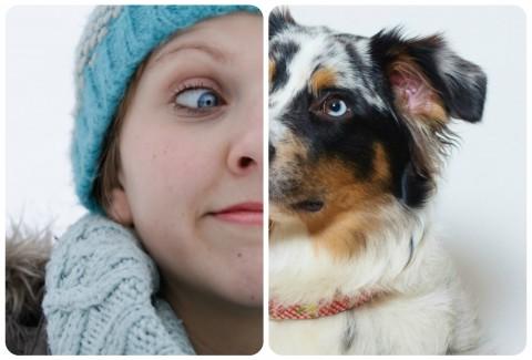Ähnlichkeit zwischen Mensch und Hund