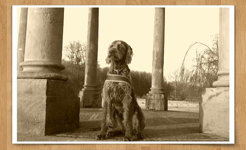 Schloss Richmond mit Hund