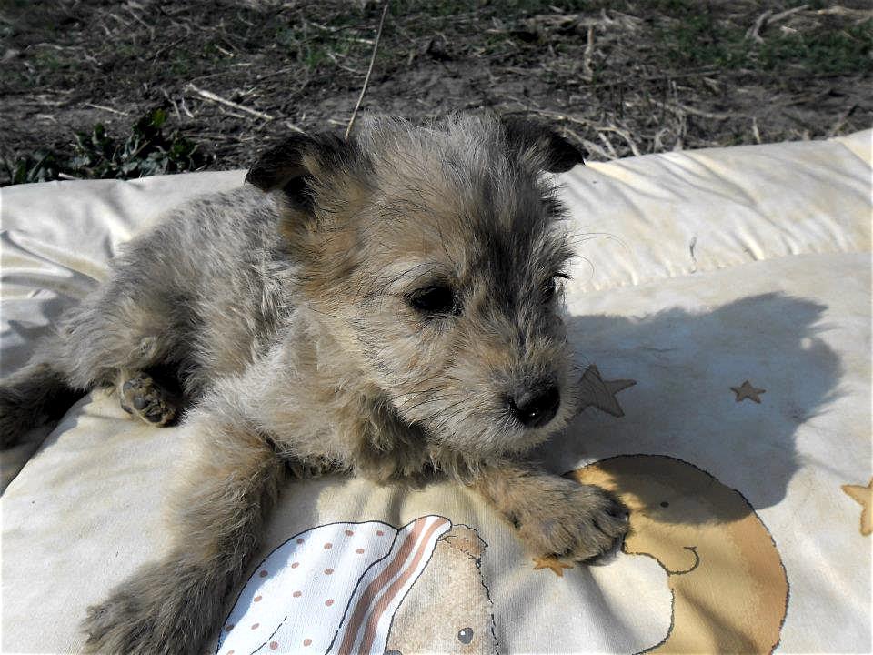 Welpe aus dem Tierschutz adoptieren
