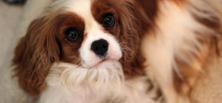 Geschichte eines Kennanlernens Hund