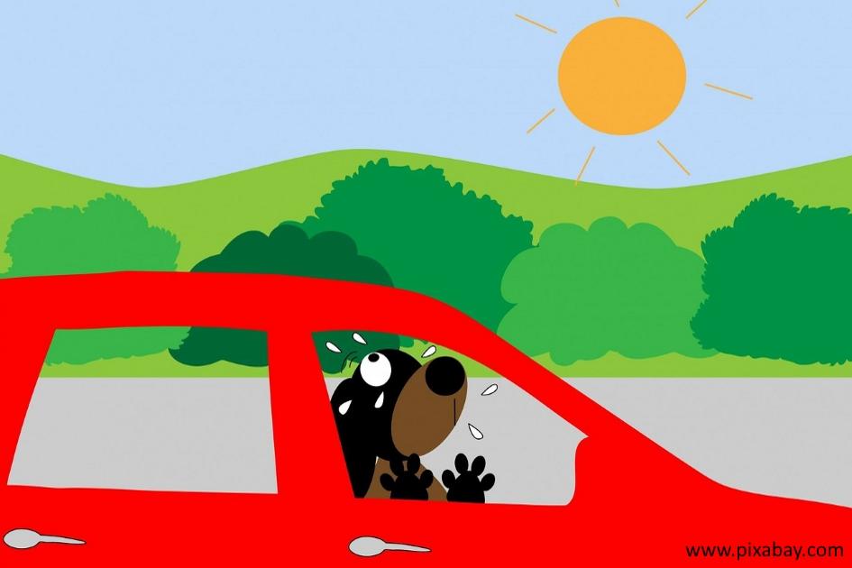 Scheibe einschlagen Hund Auto
