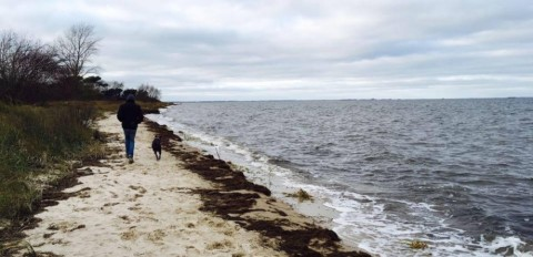 Ostseeurlaub – Wasser – Sand – Schwanenjagd
