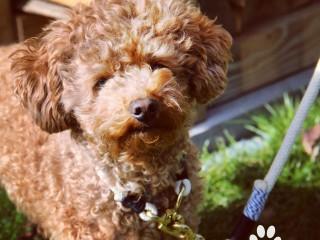 Halsband Hund DIY Tau