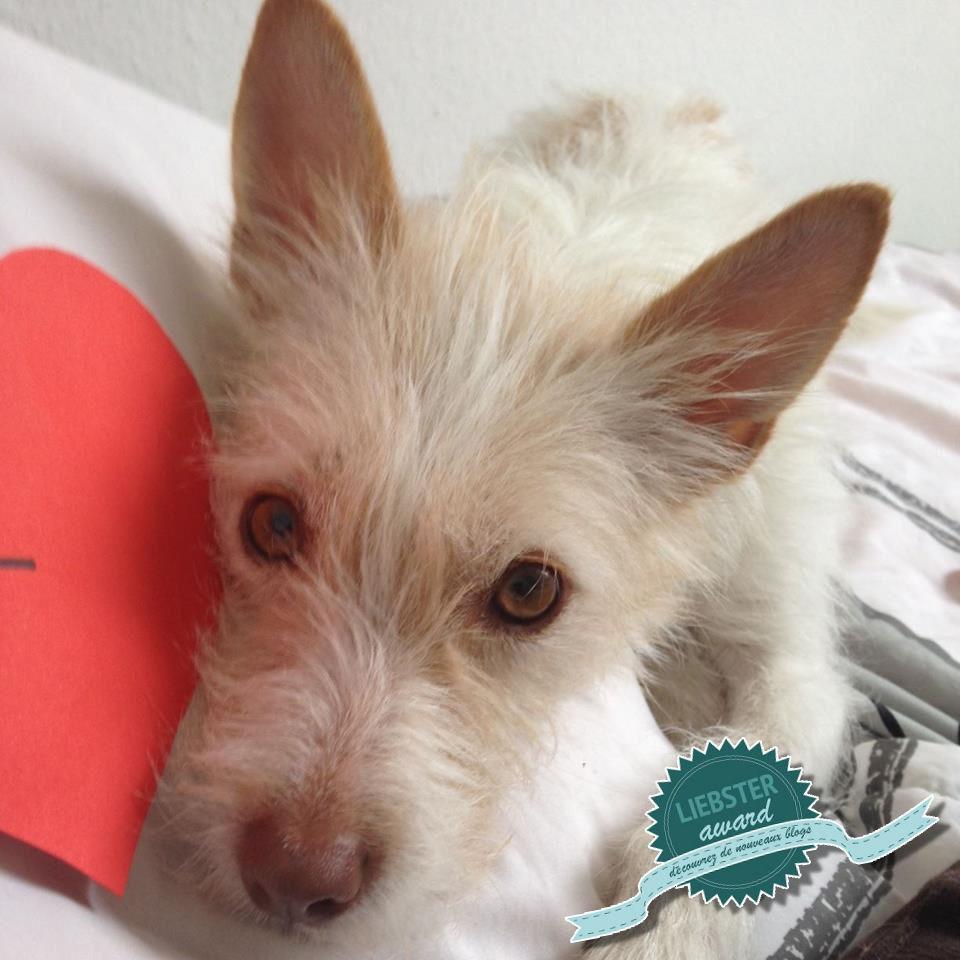 Liebster Award Hundeblog