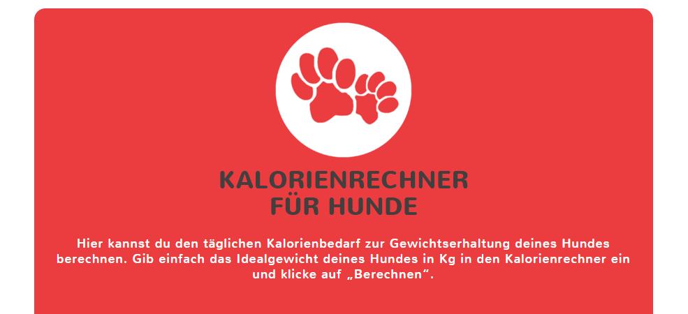 Kalorienrechner für Hunde