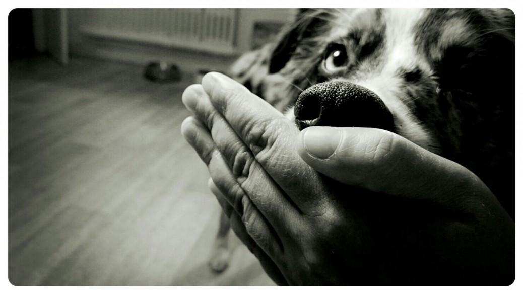 Trick Hund flüstern