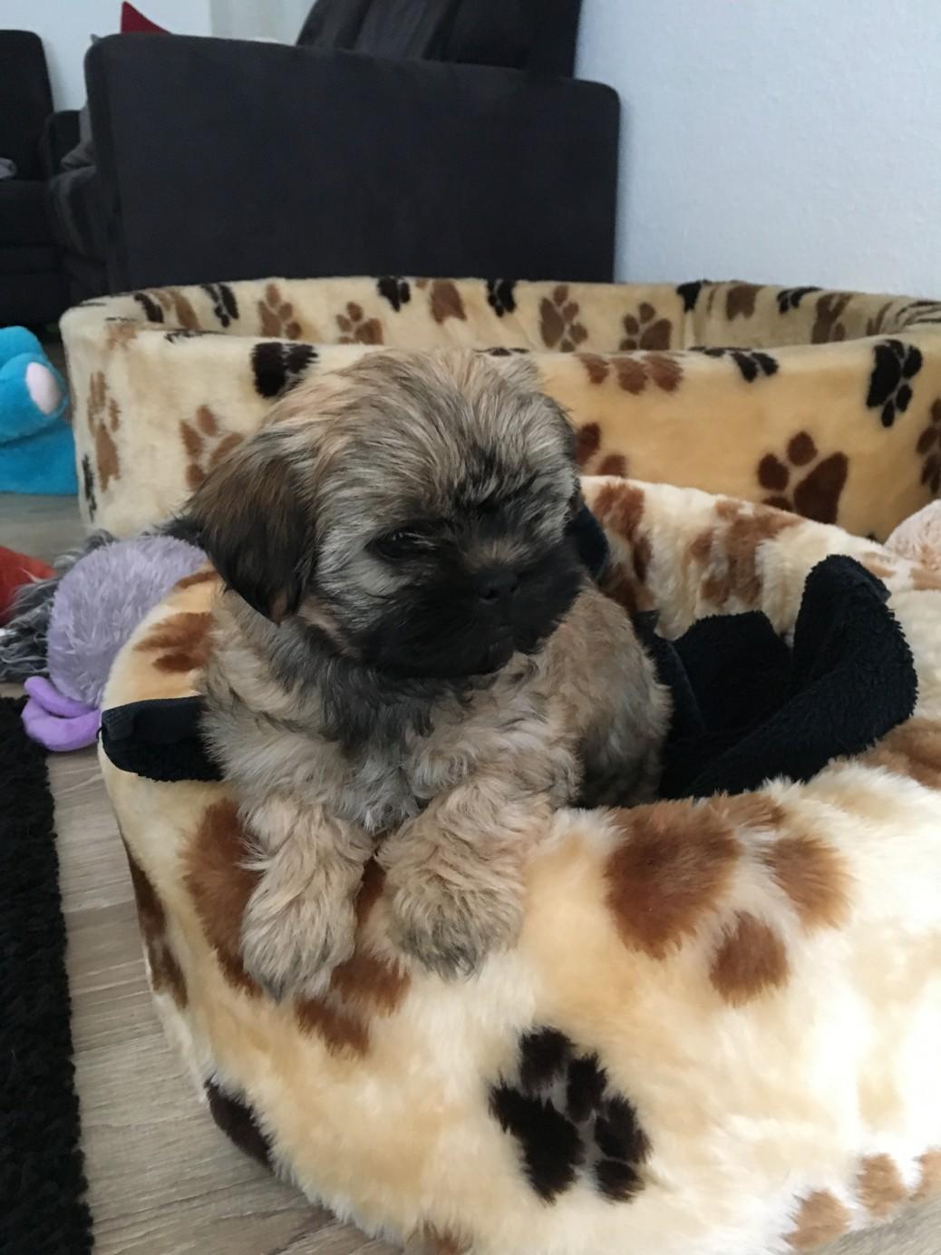 Hundeblog Die tut nichts