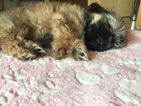 Welpentoben bei Martin Rütter DOGS