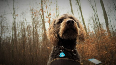 Mein Hund entdeckt 100 % der Welt in einem Grashalm