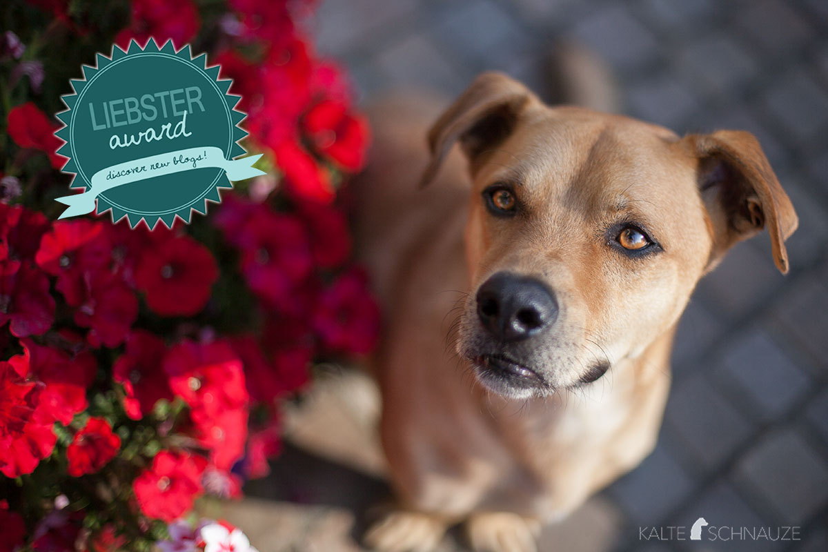 Cabo Liebster-Award Hundeblogger