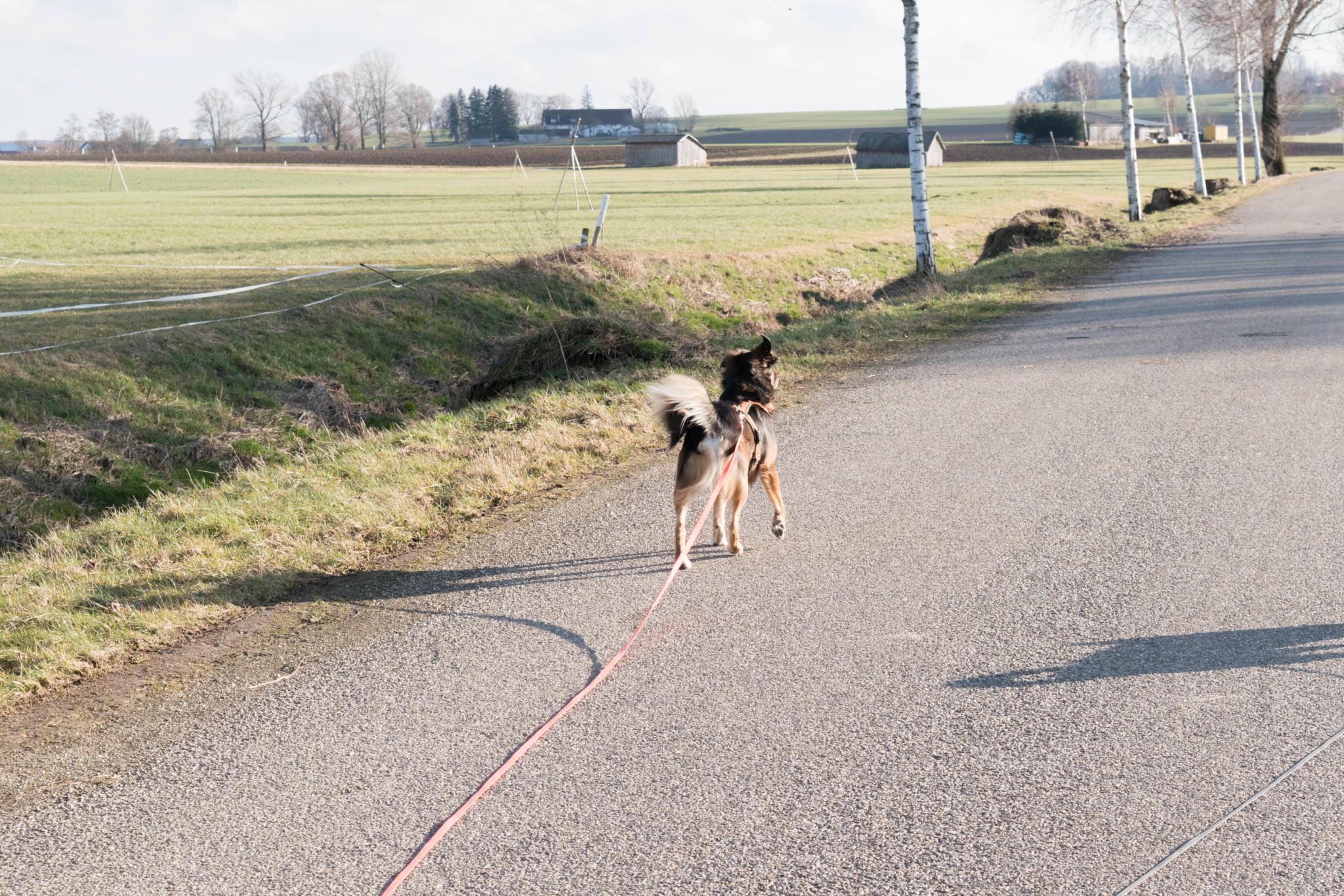 Ein Winter mit Hund in Bayern
