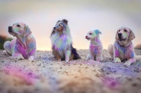 Ein farbenprächtiges Erlebnis: Hundeholifestival