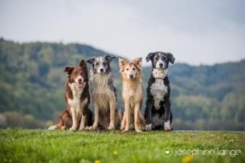 Wochenende mit vielen anderen Hunden und ihren Haltern