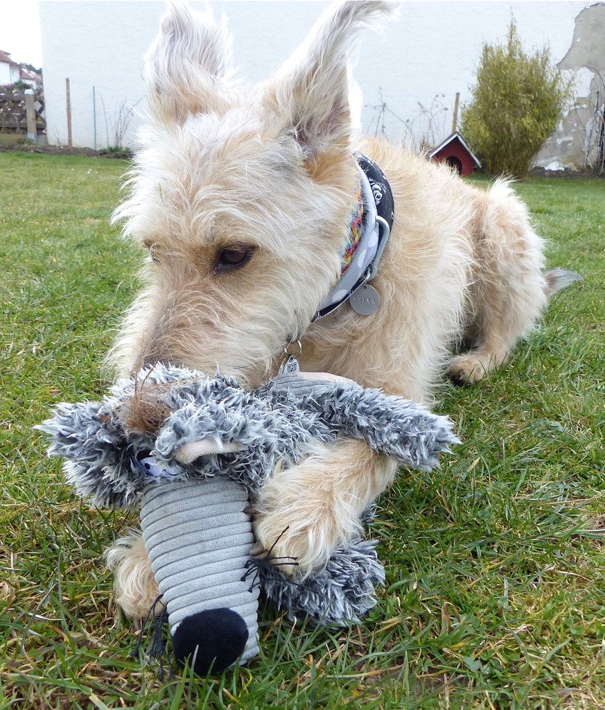 Ede Hundespielzeug