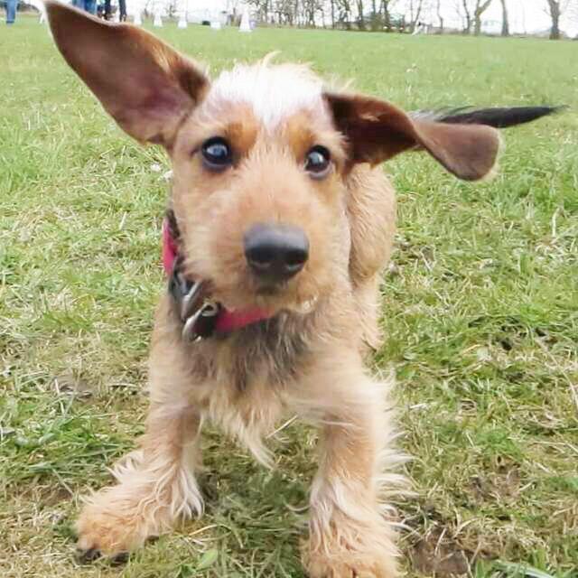 Hund ohne Flohbefall