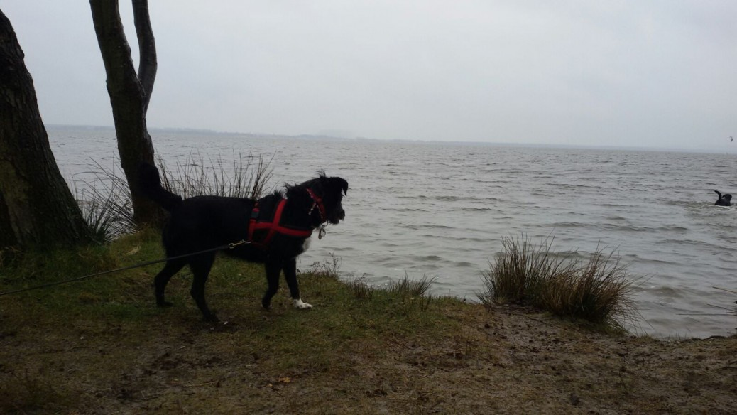 Steinhuder Meer mit Hund