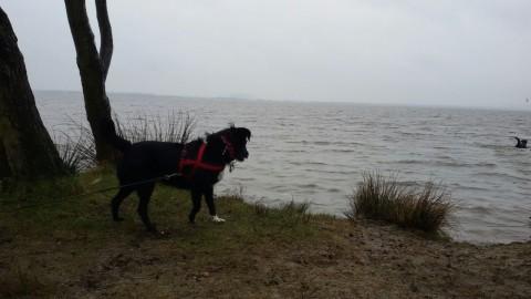 Unser (regnerische) Ausflug zum Steinhuder Meer