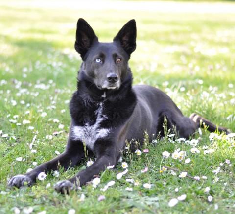 Buchtipp zum Thema Hundefotografie