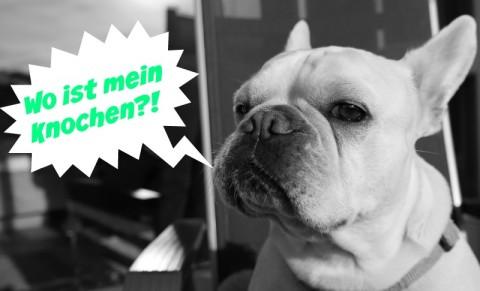 Kausnacks für Hunde: Wirkung und Gefahren