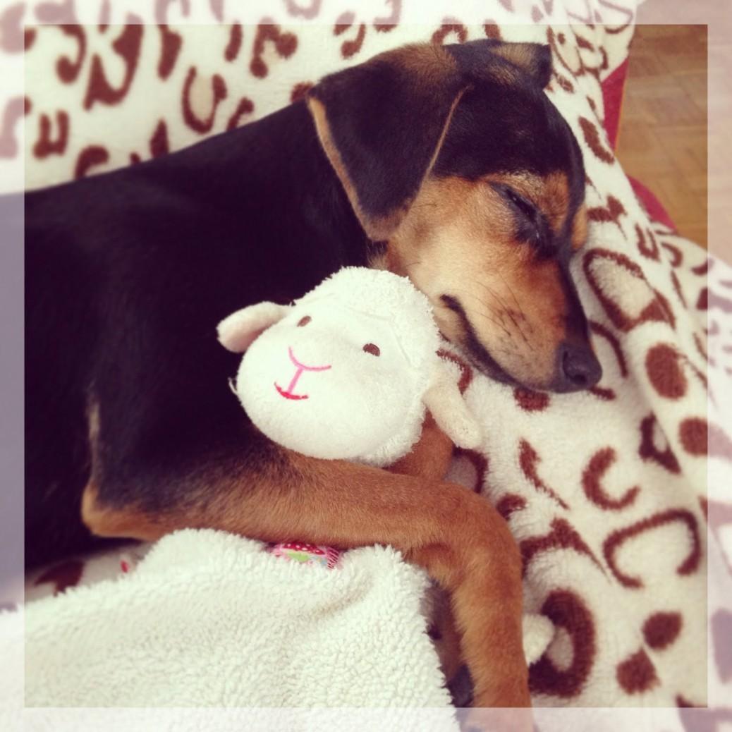 Lola's Freunde lieben das Schäfchen von Spigelburg Hundeblog Fellkind Penny