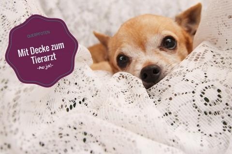 Mit Decke zum Tierarzt – damit alles leichter klappt