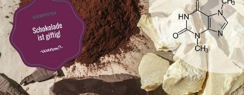 Ist Schokolade für den Hund giftig?