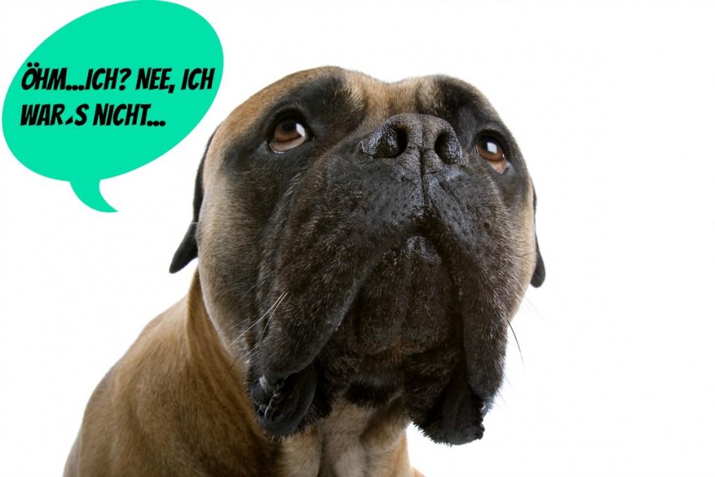Titel-Purggo-Lufterfrischung-natürlich-Hundeblog