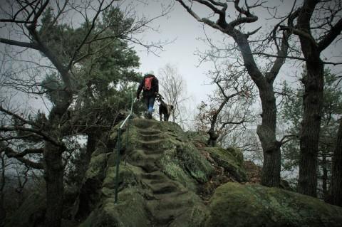 Trekking – auch mit Hund?