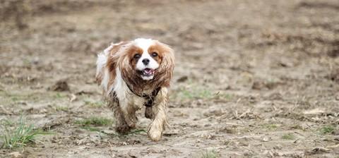 Das (Hunde-)Leben in vollen Zügen genießen