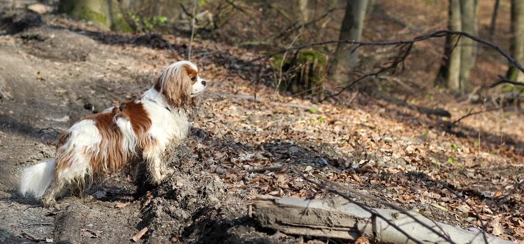 Wochenrueckblick Hundeblog