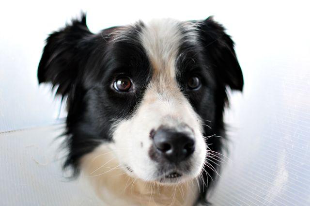 Hilfe bei Spondylose beim Hund
