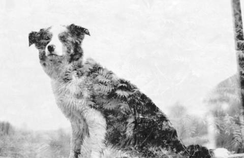 Mehrfachbelichtung – das kreative Hundefoto