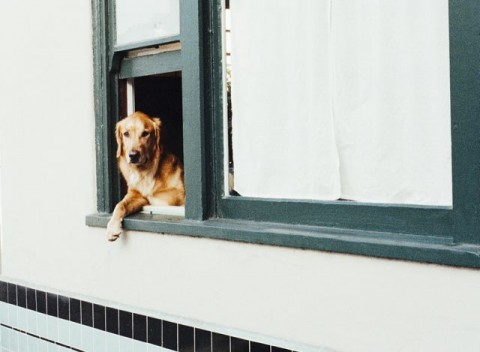 Spondylose beim Hund – was es für deinen Vierbeiner bedeutet