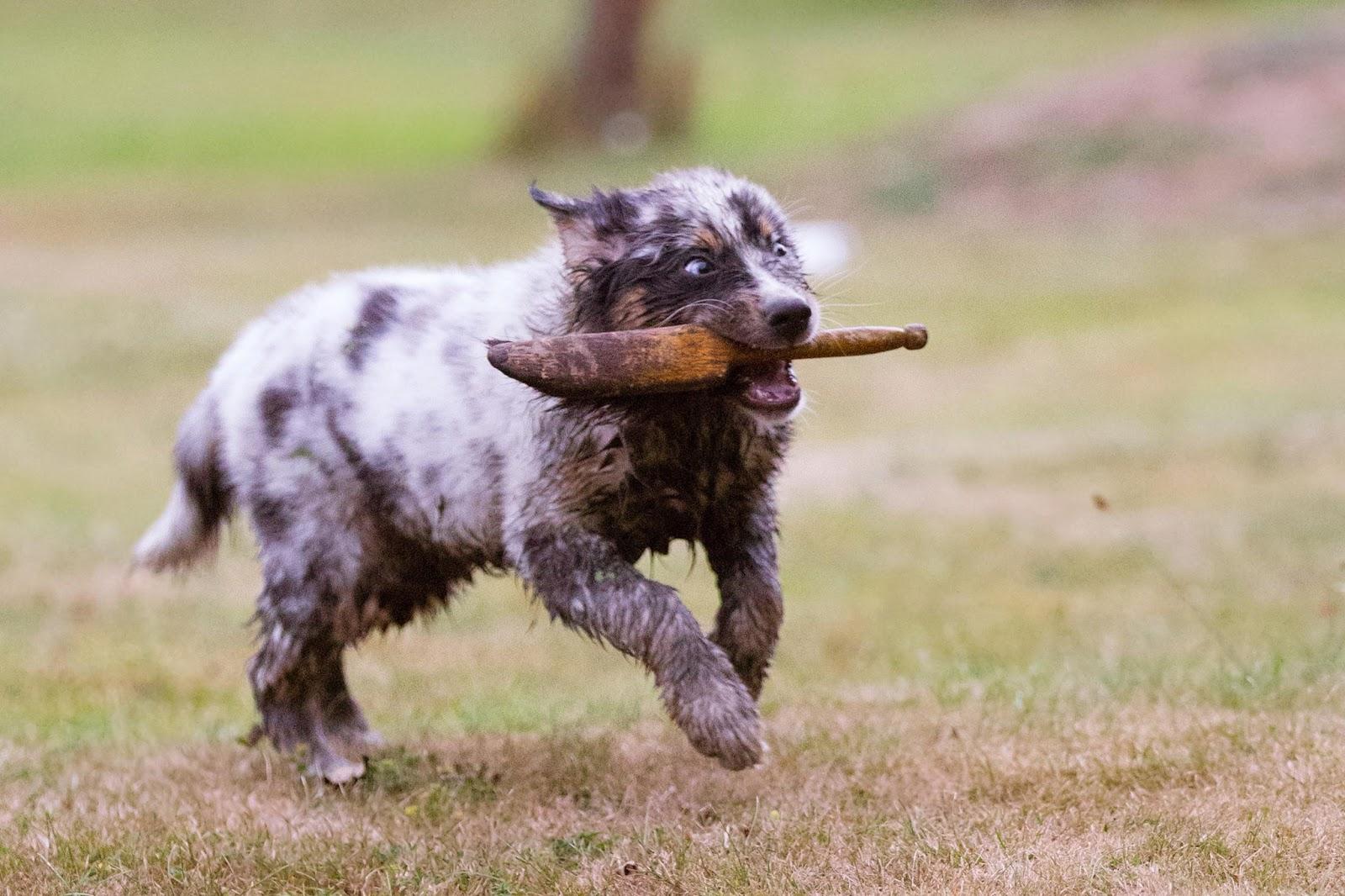 10 Dinge Hunde