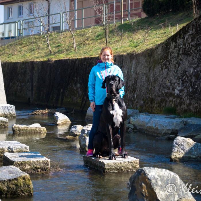 Wasserspielplatz mit Hund