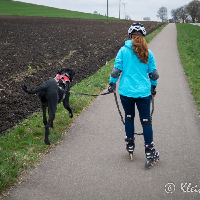 Inliner fahren mit Hund