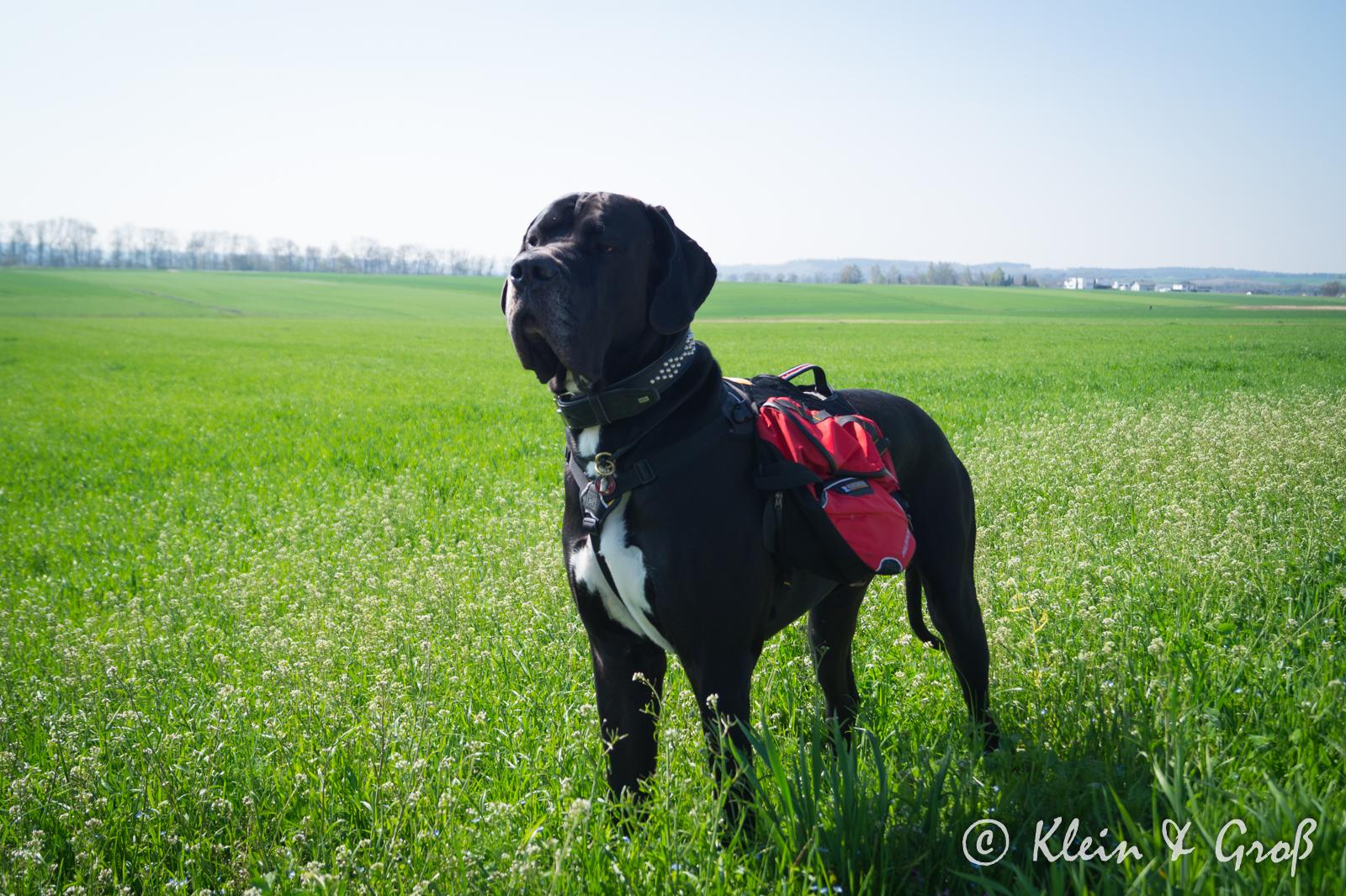Rucksack für Hunde Erfahrungen