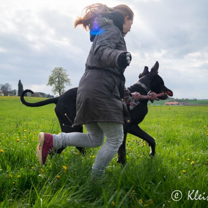 Spielen mit Dogge