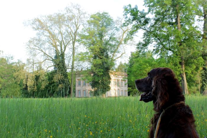Ausflug nach Aschaffenburg mit Hund