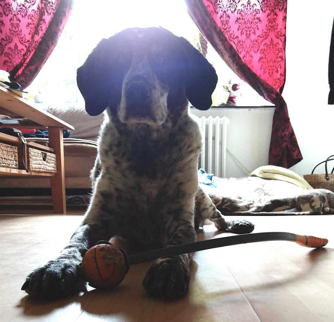 Ballschleuder Trixie Hundeblog Jessie & me 3