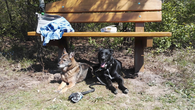 Kurzurlaub mit Hund
