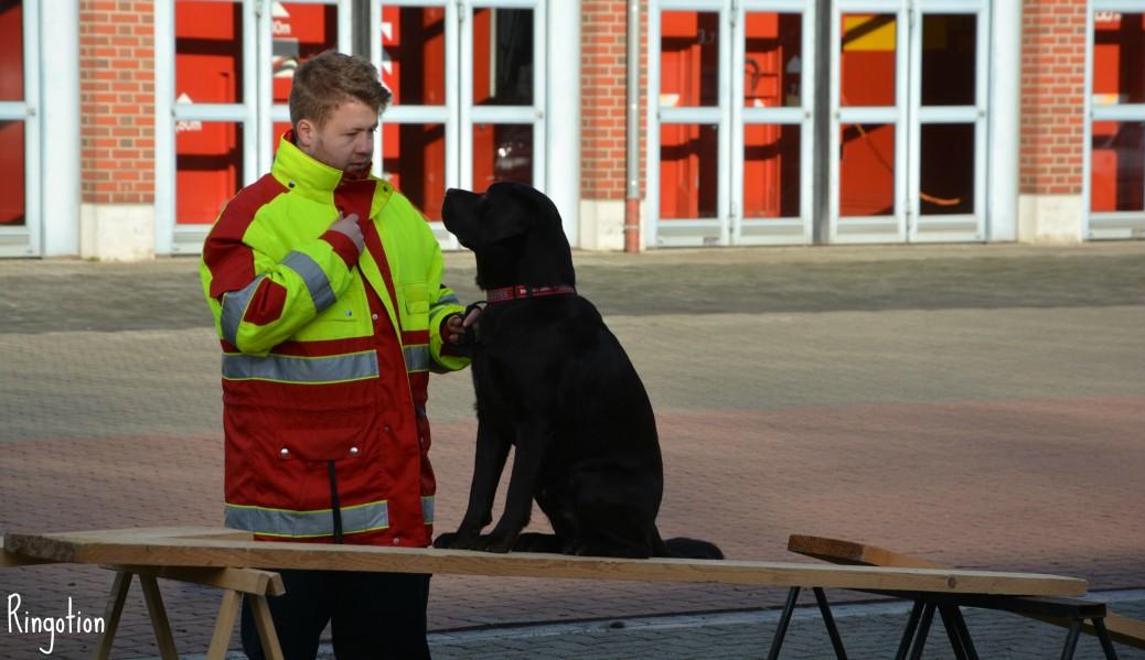 Ausbildung zum Rettungshund