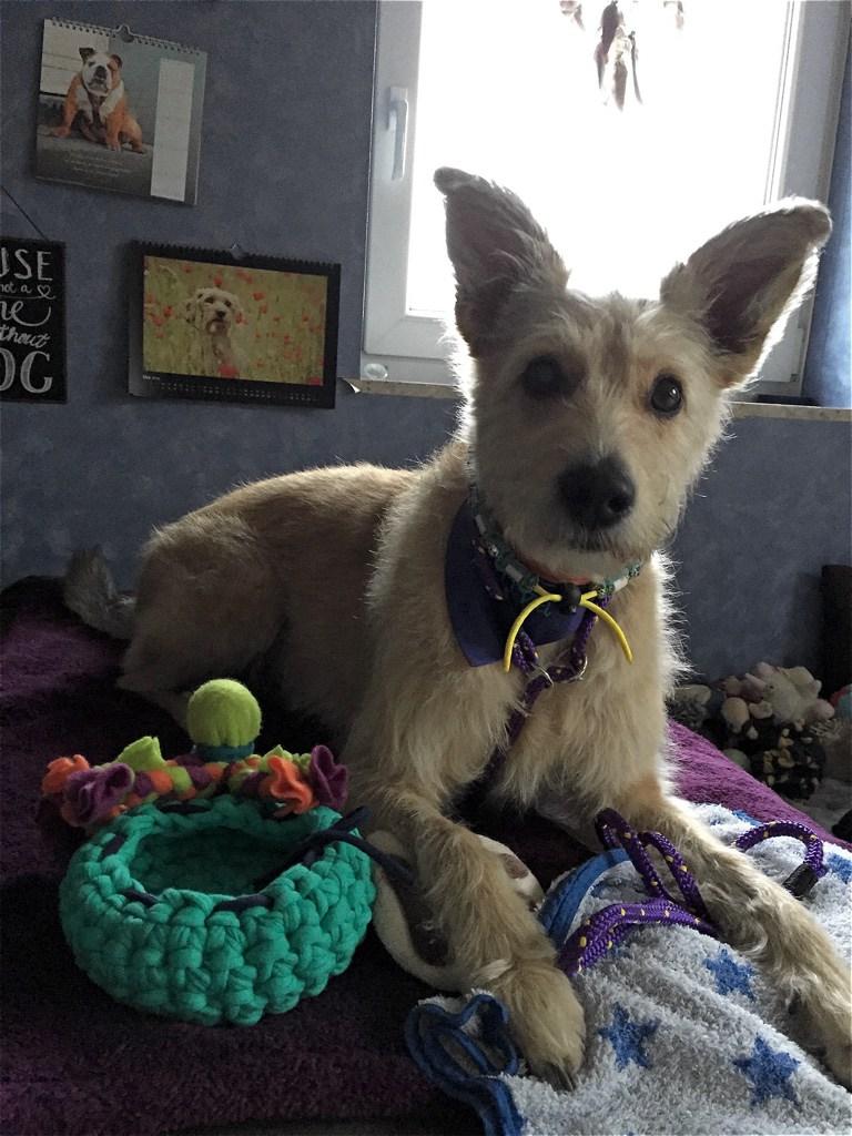 Glueckshund Erfahrungen