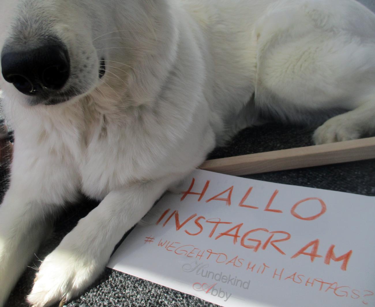 Hallo Instagramm Hundekind Abby