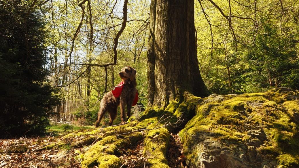 Hunderucksack Harz