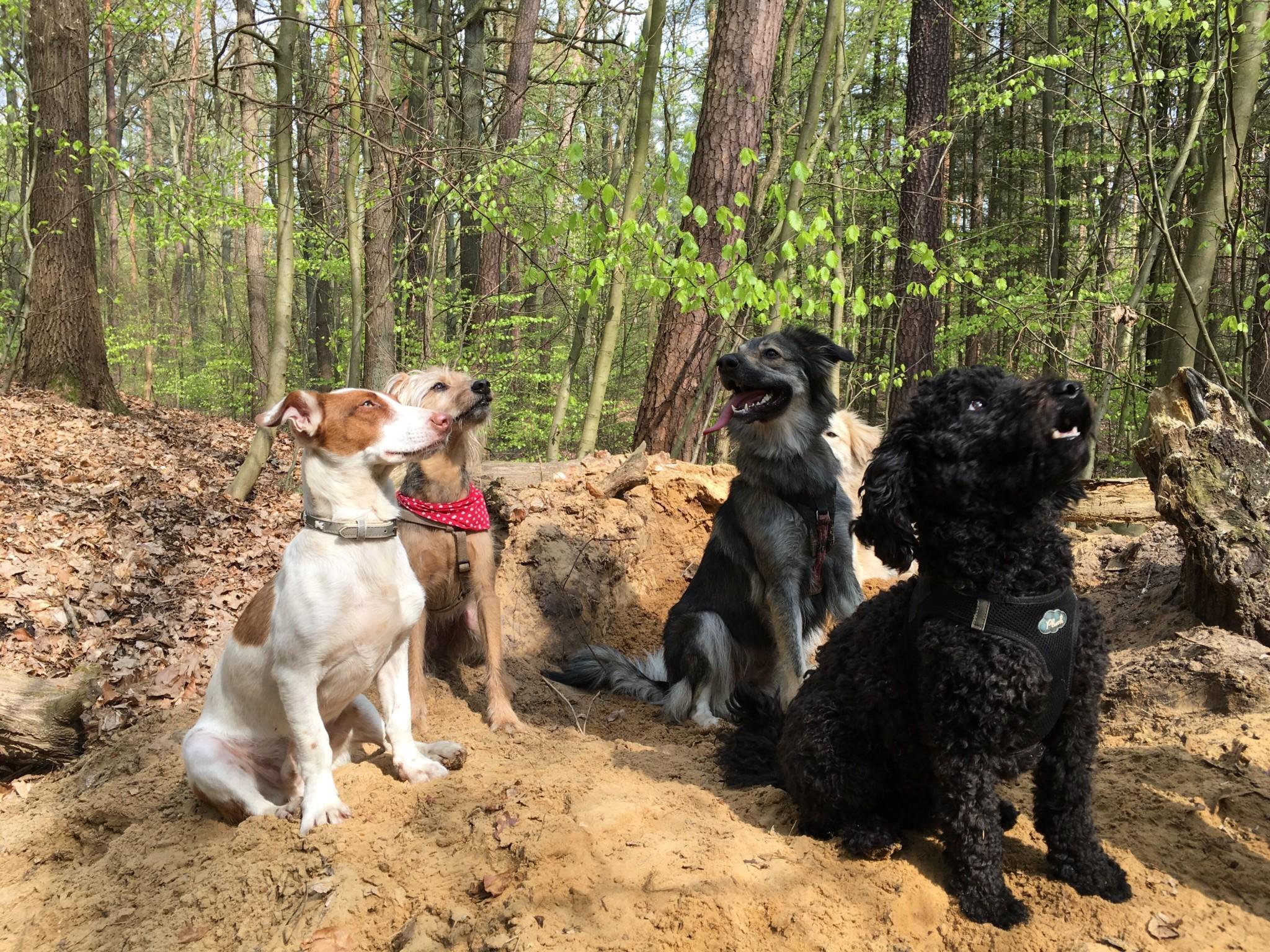 Hundepension was ist zu beachten