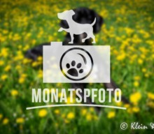 "[Monatspfoto ""Farbsalat"" April 2016]"