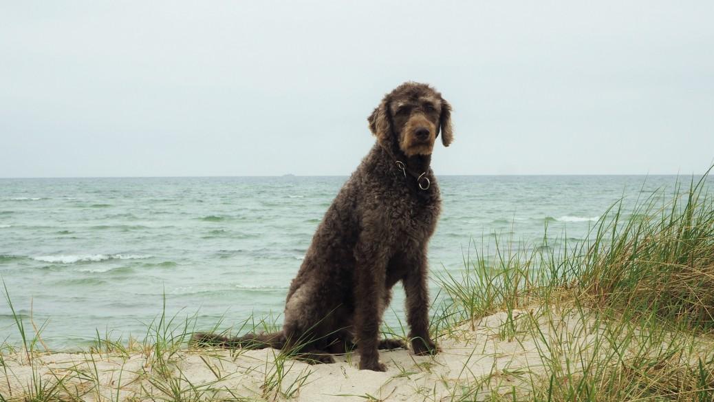 Morgen am Meer mit Hund