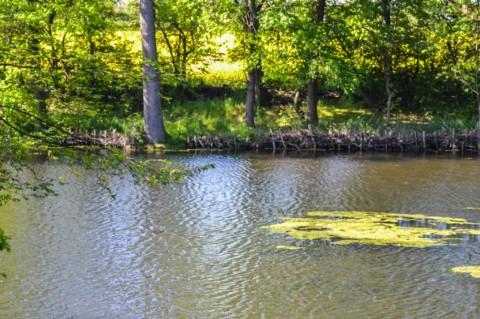 Die Sage unseres alten Glaubitzer Sees